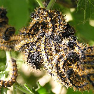 Butterflies Amp Moths Interesting